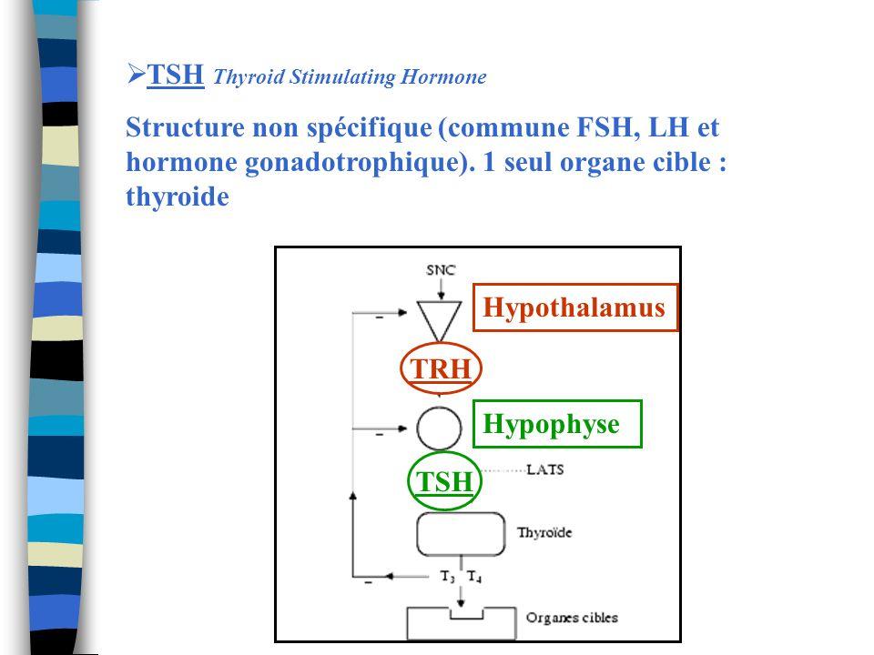 TSH Thyroid Stimulating Hormone Structure non spécifique (commune FSH, LH et hormone gonadotrophique). 1 seul organe cible : thyroide TRH TSH Hypothal