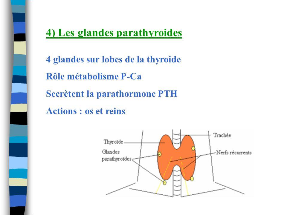 4) Les glandes parathyroides 4 glandes sur lobes de la thyroide Rôle métabolisme P-Ca Secrètent la parathormone PTH Actions : os et reins