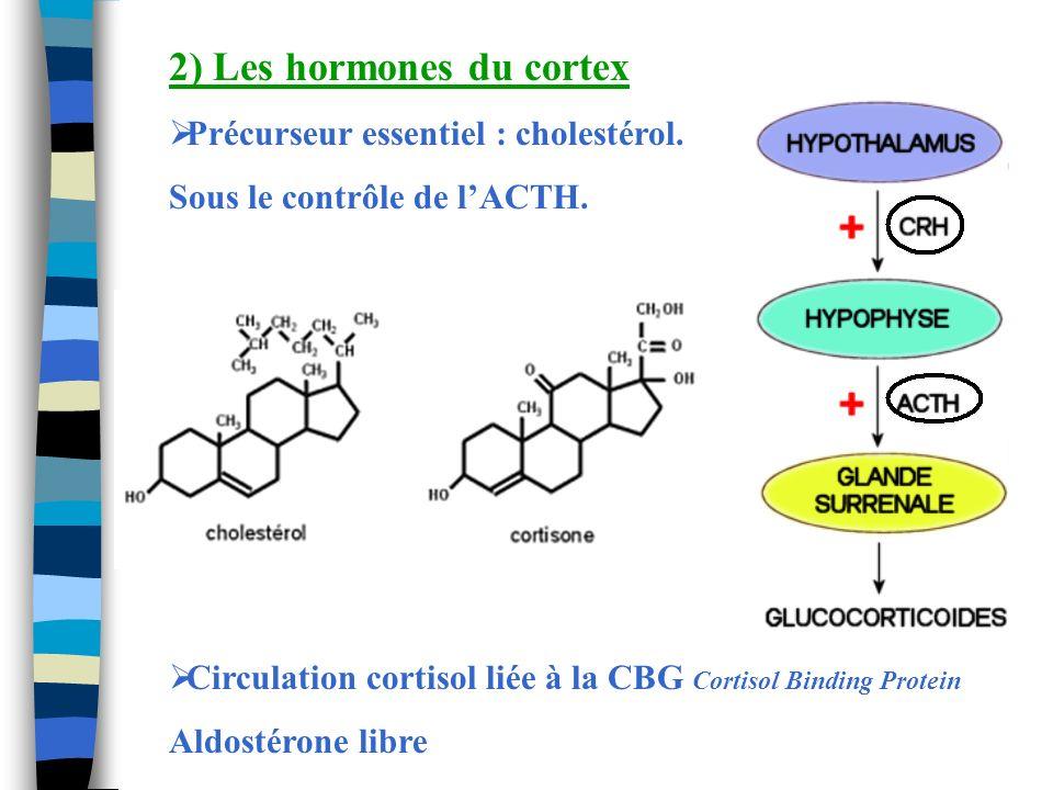 2) Les hormones du cortex Précurseur essentiel : cholestérol. Sous le contrôle de lACTH. Circulation cortisol liée à la CBG Cortisol Binding Protein A