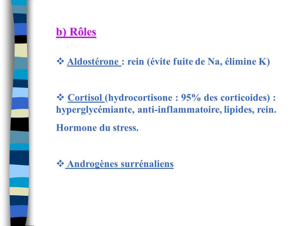 b) Rôles Aldostérone : rein (évite fuite de Na, élimine K) Cortisol (hydrocortisone : 95% des corticoides) : hyperglycémiante, anti-inflammatoire, lip