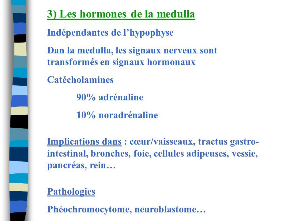 3) Les hormones de la medulla Indépendantes de lhypophyse Dan la medulla, les signaux nerveux sont transformés en signaux hormonaux Catécholamines 90%