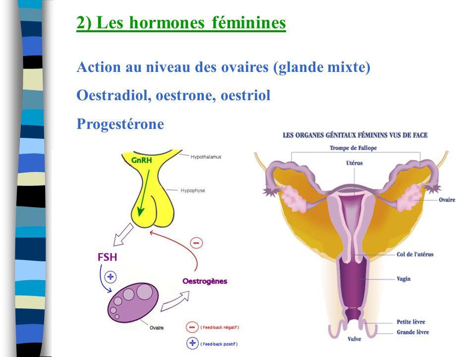 2) Les hormones féminines Action au niveau des ovaires (glande mixte) Oestradiol, oestrone, oestriol Progestérone