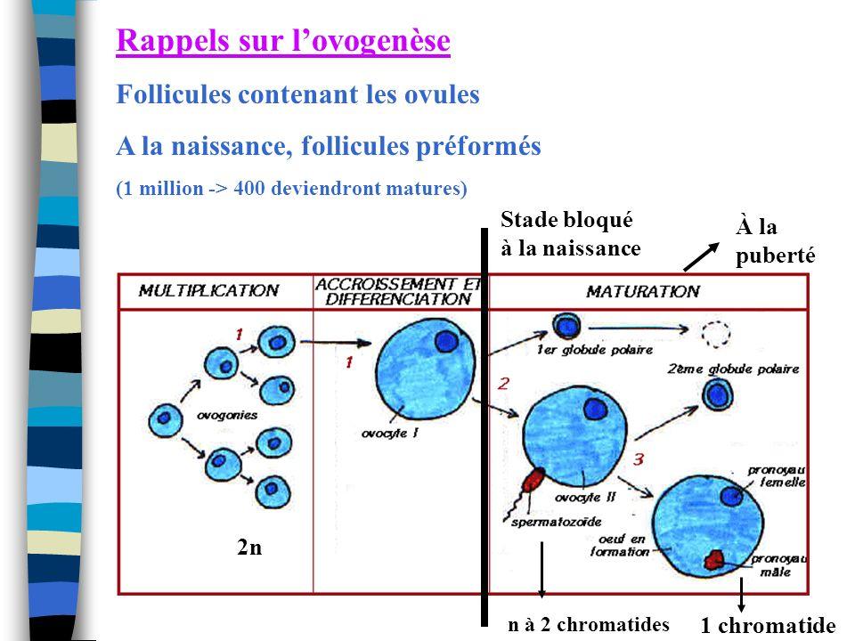 Rappels sur lovogenèse Follicules contenant les ovules A la naissance, follicules préformés (1 million -> 400 deviendront matures) n à 2 chromatides 2