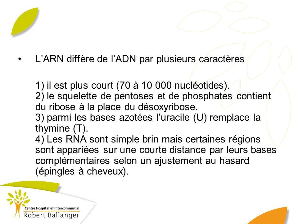 LARN diffère de lADN par plusieurs caractères 1) il est plus court (70 à 10 000 nucléotides). 2) le squelette de pentoses et de phosphates contient du