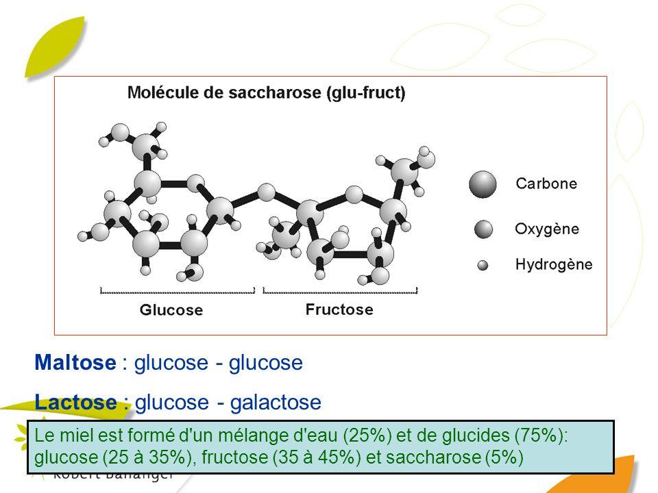 Maltose : glucose - glucose Lactose : glucose - galactose Le miel est formé d'un mélange d'eau (25%) et de glucides (75%): glucose (25 à 35%), fructos