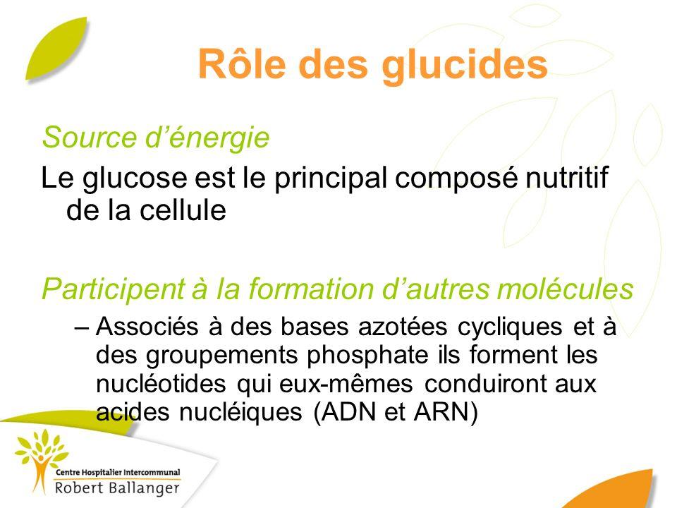Rôle des glucides Source dénergie Le glucose est le principal composé nutritif de la cellule Participent à la formation dautres molécules –Associés à
