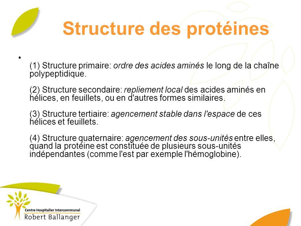 Structure des protéines (1) Structure primaire: ordre des acides aminés le long de la chaîne polypeptidique. (2) Structure secondaire: repliement loca