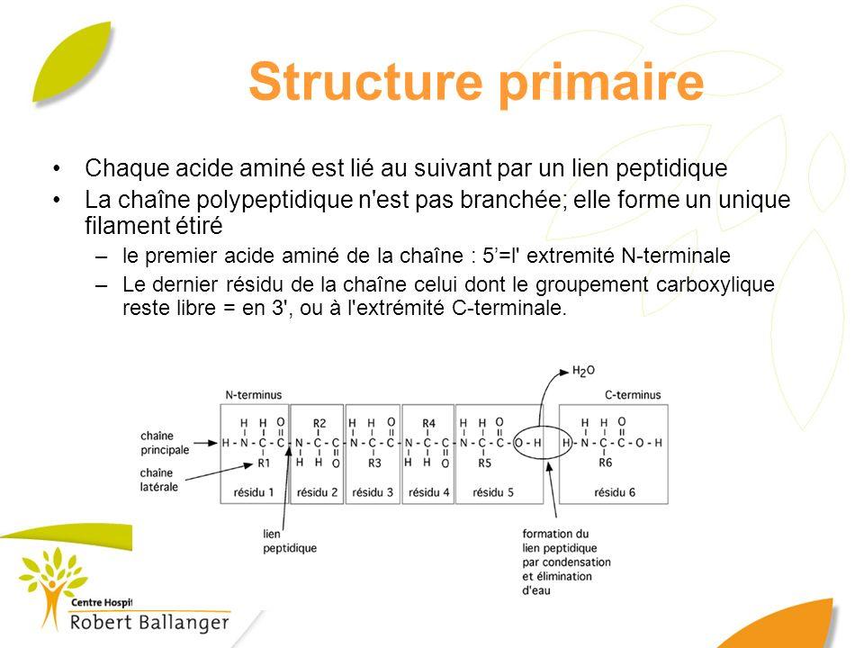 Structure primaire Chaque acide aminé est lié au suivant par un lien peptidique La chaîne polypeptidique n'est pas branchée; elle forme un unique fila
