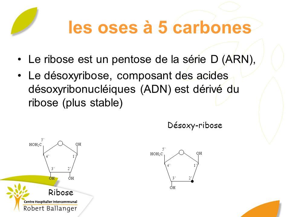 Désoxy-ribose OH 1 23 4 5 HOH 2 C OH 1 23 4 5 HOH 2 C Ribose les oses à 5 carbones Le ribose est un pentose de la série D (ARN), Le désoxyribose, comp