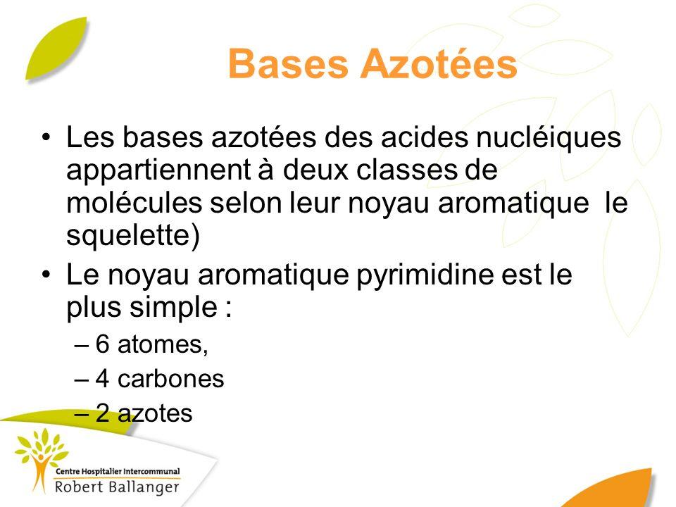 Bases Azotées Les bases azotées des acides nucléiques appartiennent à deux classes de molécules selon leur noyau aromatique le squelette) Le noyau aro