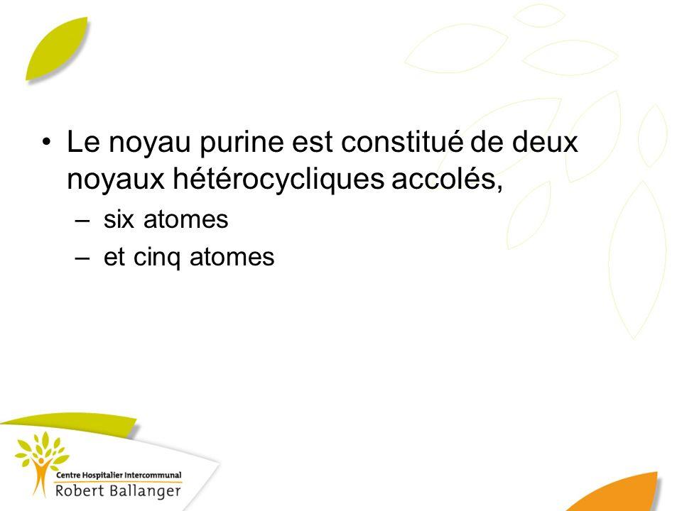 Le noyau purine est constitué de deux noyaux hétérocycliques accolés, – six atomes – et cinq atomes