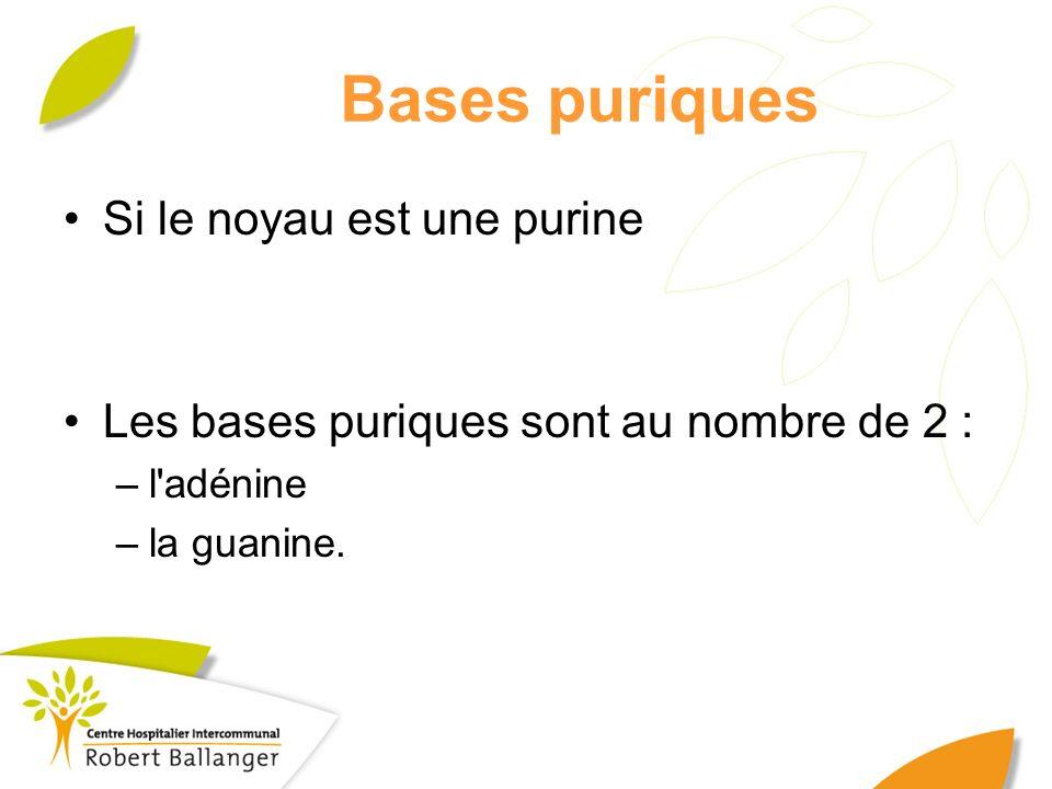 Bases puriques Si le noyau est une purine Les bases puriques sont au nombre de 2 : –l'adénine –la guanine.