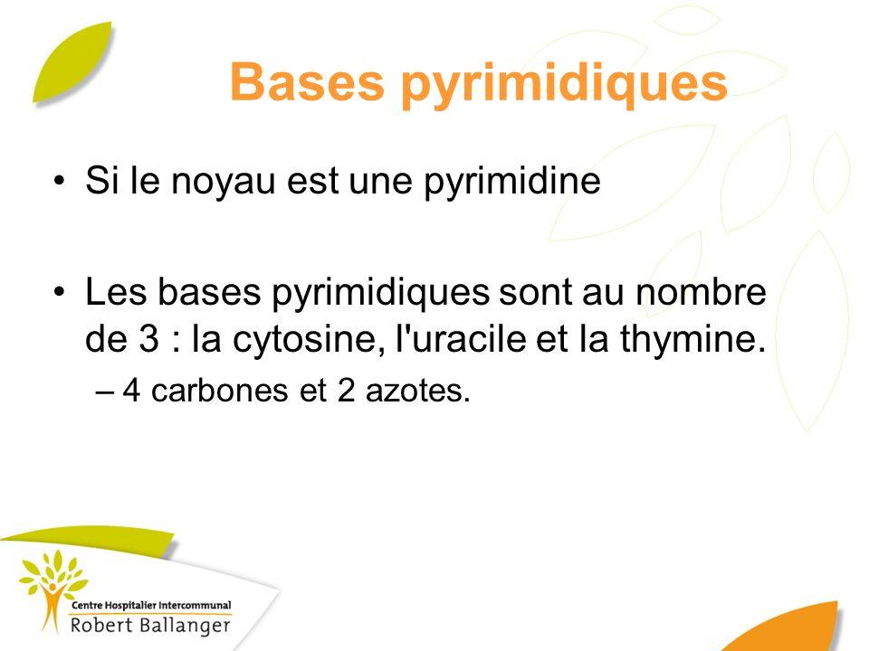 Bases pyrimidiques Si le noyau est une pyrimidine Les bases pyrimidiques sont au nombre de 3 : la cytosine, l'uracile et la thymine. –4 carbones et 2