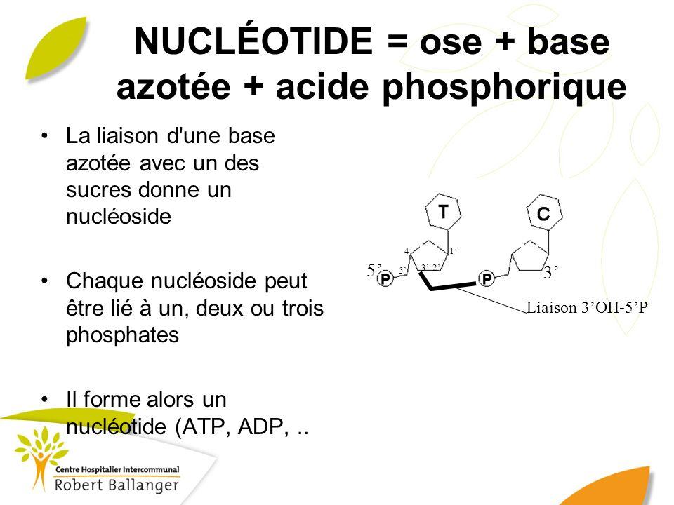 NUCLÉOTIDE = ose + base azotée + acide phosphorique La liaison d'une base azotée avec un des sucres donne un nucléoside Chaque nucléoside peut être li