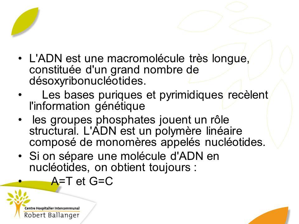 L'ADN est une macromolécule très longue, constituée d'un grand nombre de désoxyribonucléotides. Les bases puriques et pyrimidiques recèlent l'informat