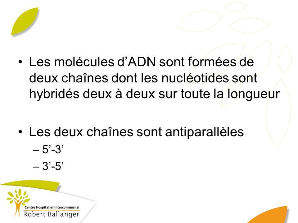 Les molécules dADN sont formées de deux chaînes dont les nucléotides sont hybridés deux à deux sur toute la longueur Les deux chaînes sont antiparallè