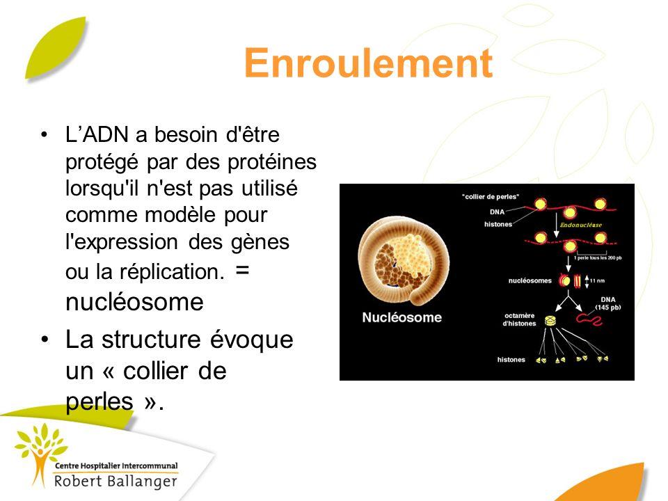 Enroulement LADN a besoin d'être protégé par des protéines lorsqu'il n'est pas utilisé comme modèle pour l'expression des gènes ou la réplication. = n