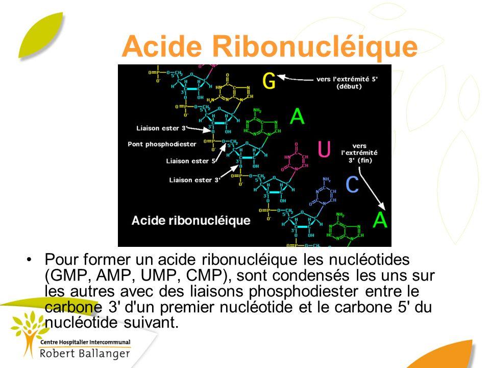 Acide Ribonucléique Pour former un acide ribonucléique les nucléotides (GMP, AMP, UMP, CMP), sont condensés les uns sur les autres avec des liaisons p