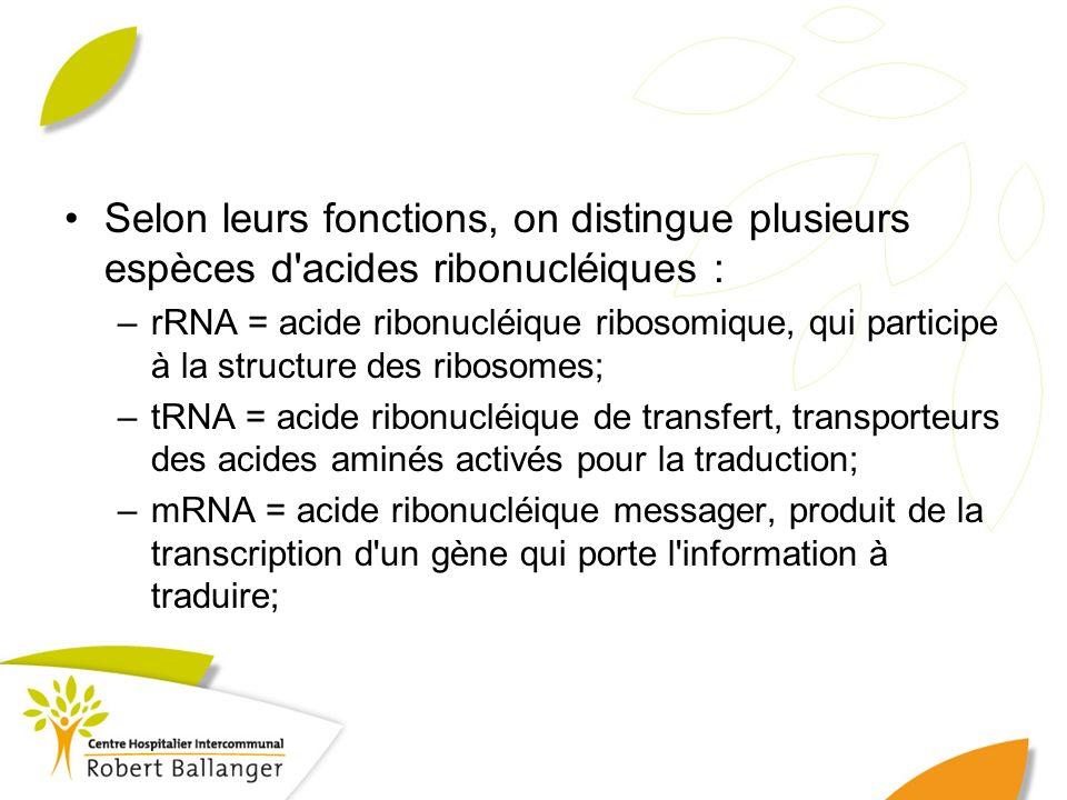 Selon leurs fonctions, on distingue plusieurs espèces d'acides ribonucléiques : –rRNA = acide ribonucléique ribosomique, qui participe à la structure