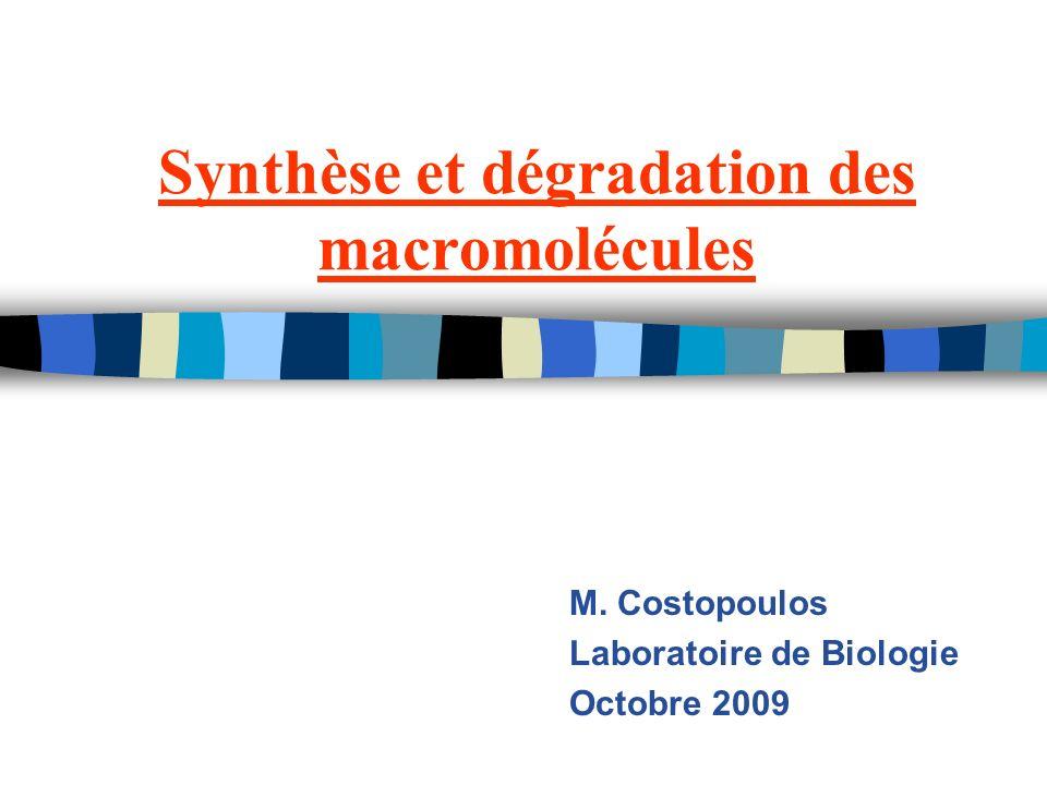Synthèse et dégradation des macromolécules M. Costopoulos Laboratoire de Biologie Octobre 2009