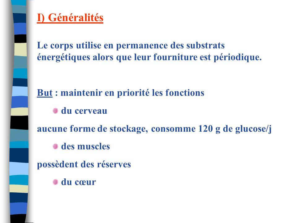 I) Généralités Le corps utilise en permanence des substrats énergétiques alors que leur fourniture est périodique. But : maintenir en priorité les fon