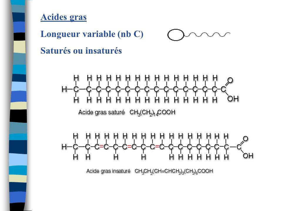 Acides gras Longueur variable (nb C) Saturés ou insaturés