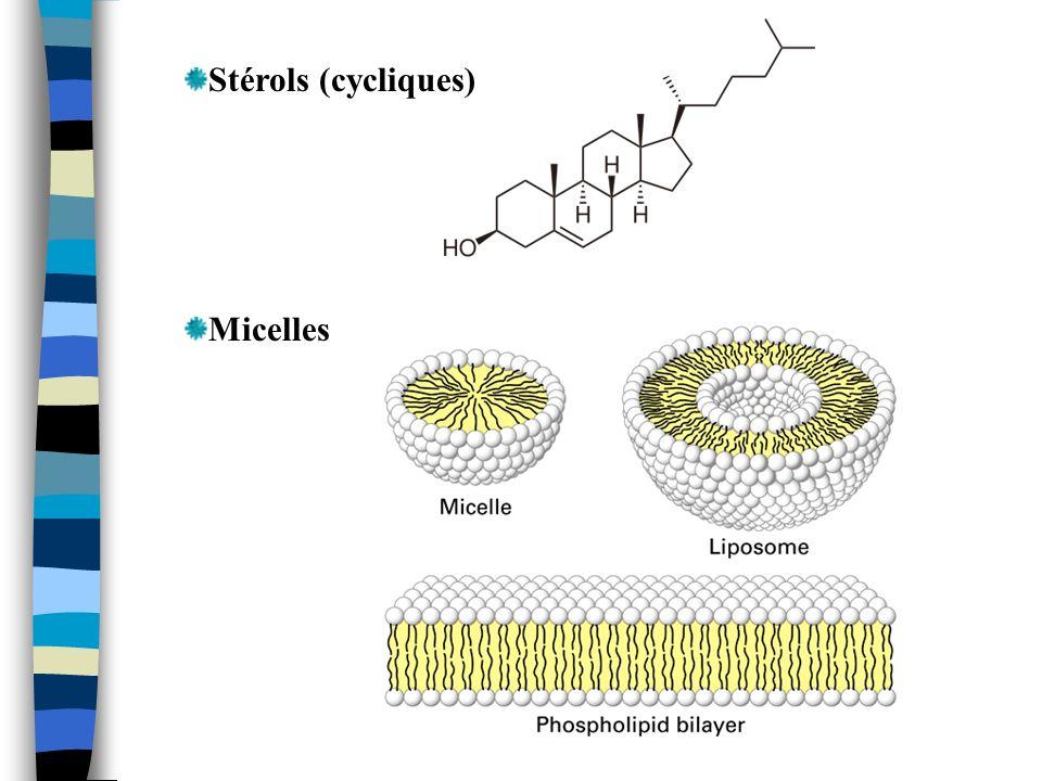 Stérols (cycliques) Micelles