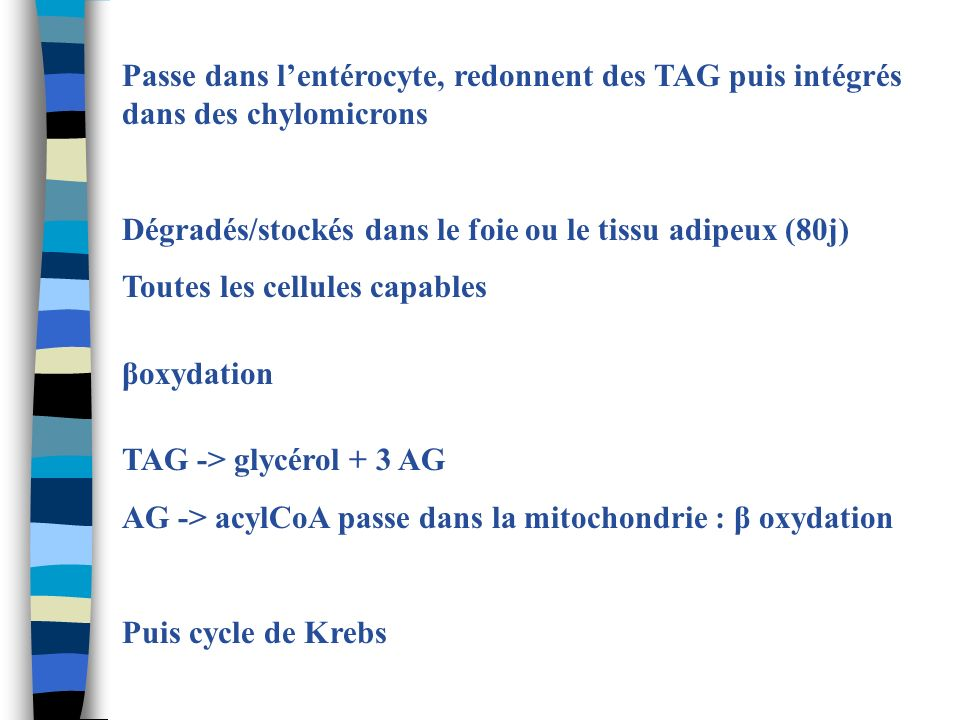 Passe dans lentérocyte, redonnent des TAG puis intégrés dans des chylomicrons Dégradés/stockés dans le foie ou le tissu adipeux (80j) Toutes les cellu