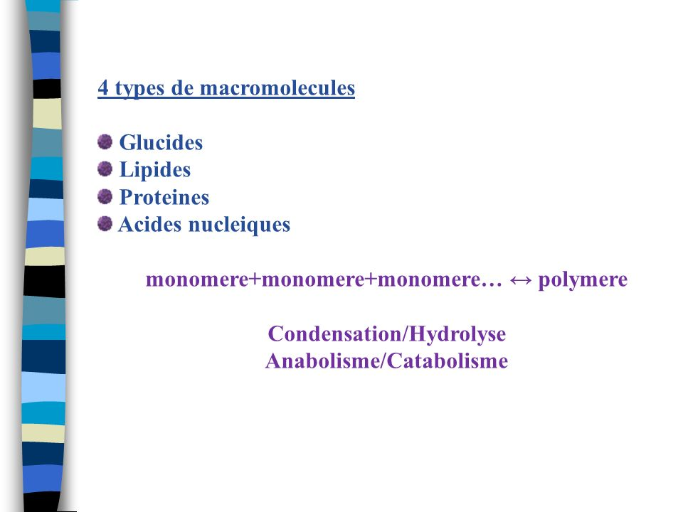 4 types de macromolecules Glucides Lipides Proteines Acides nucleiques monomere+monomere+monomere… polymere Condensation/Hydrolyse Anabolisme/Cataboli