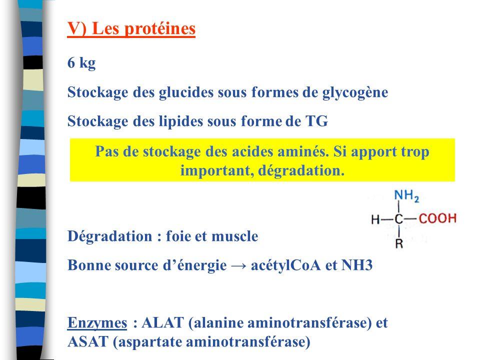 V) Les protéines 6 kg Stockage des glucides sous formes de glycogène Stockage des lipides sous forme de TG Dégradation : foie et muscle Bonne source d