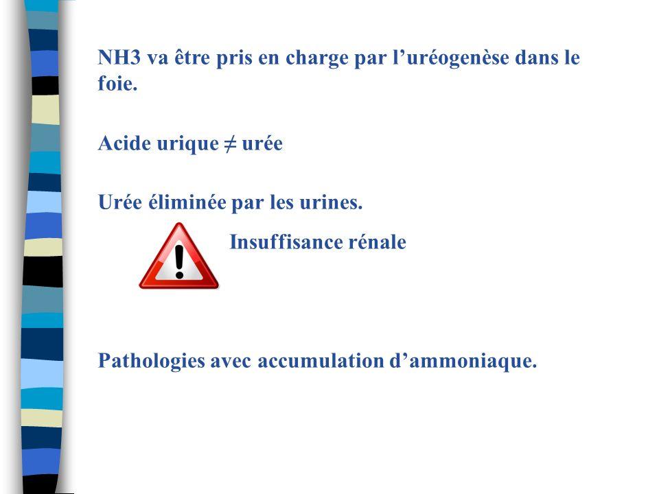 NH3 va être pris en charge par luréogenèse dans le foie. Acide urique urée Urée éliminée par les urines. Insuffisance rénale Pathologies avec accumula