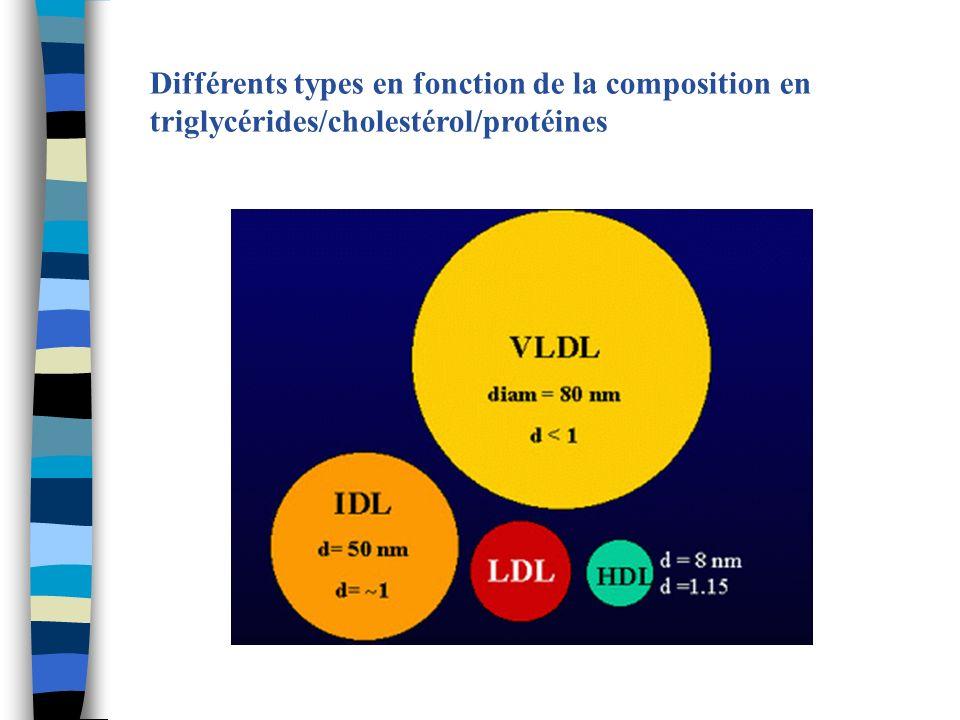 Différents types en fonction de la composition en triglycérides/cholestérol/protéines