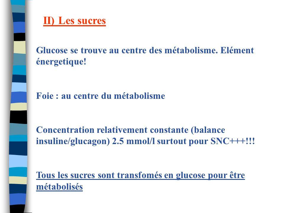 II) Les sucres Glucose se trouve au centre des métabolisme. Elément énergetique! Foie : au centre du métabolisme Concentration relativement constante