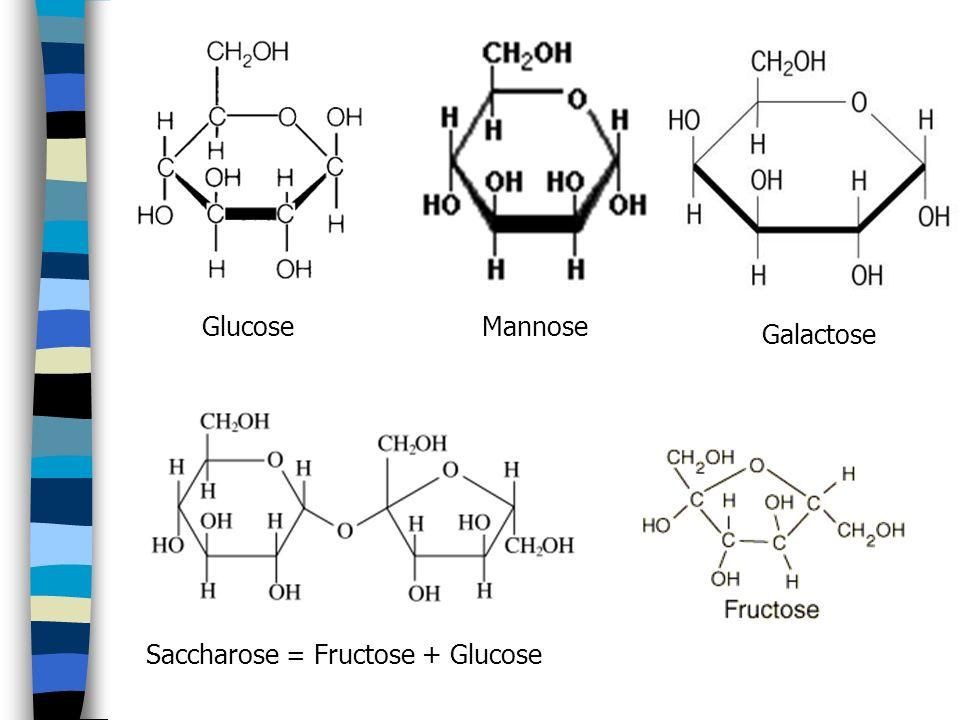 GlucoseMannose Galactose Saccharose = Fructose + Glucose