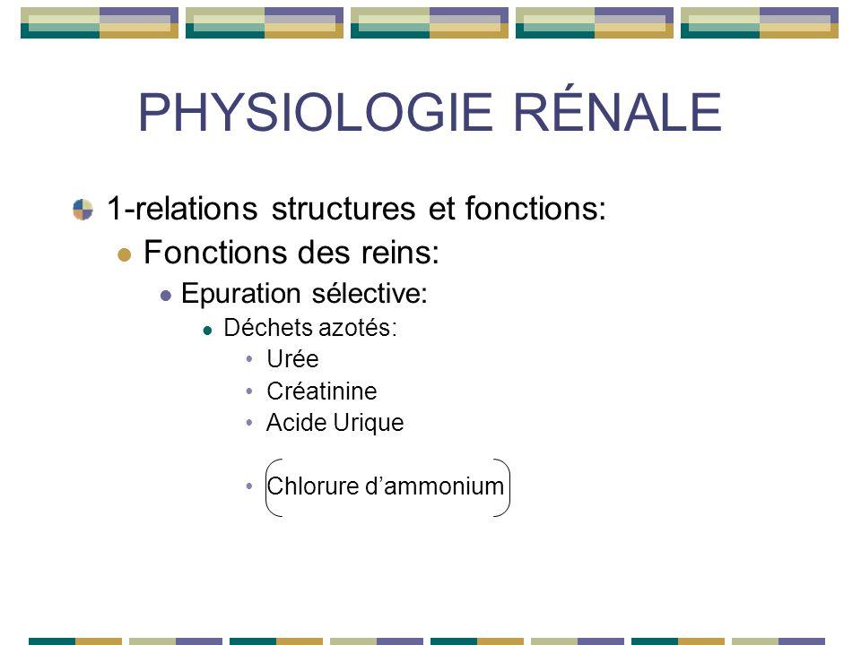 PHYSIOLOGIE RÉNALE 1-relations structures et fonctions: Fonctions des reins: Epuration sélective: Déchets azotés: Urée Créatinine Acide Urique Chlorure dammonium
