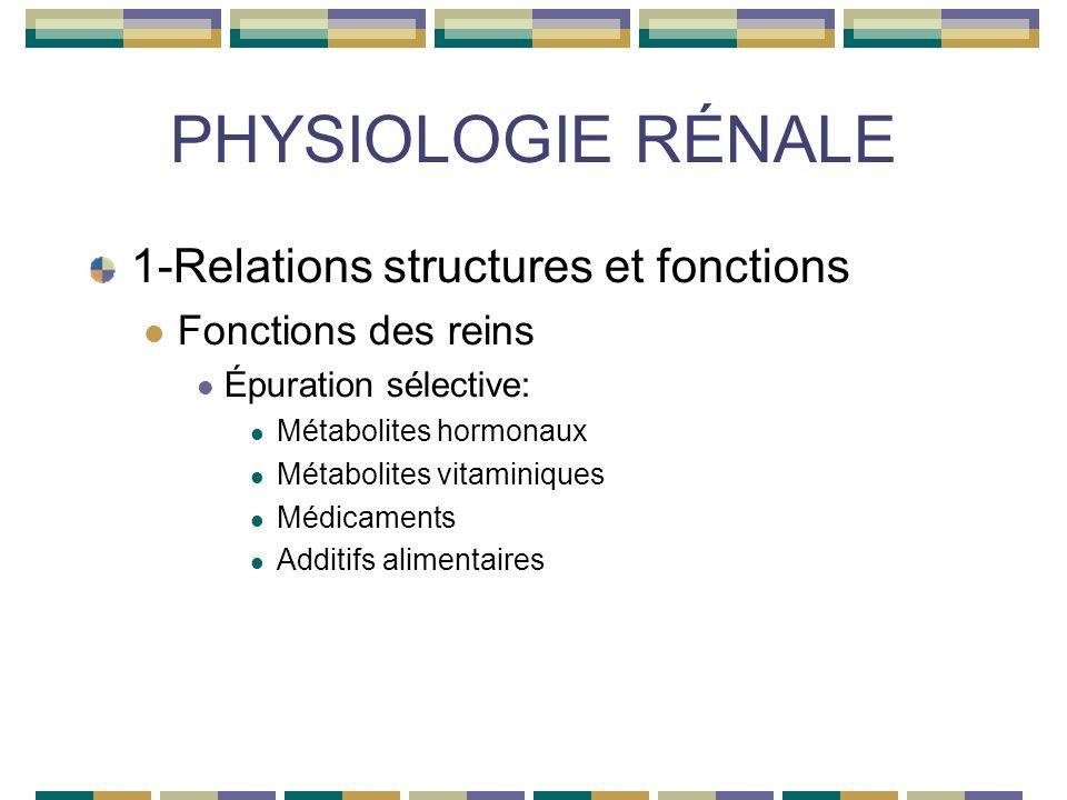PHYSIOLOGIE RÉNALE 1-Relations structures et fonctions Fonctions des reins Épuration sélective: Métabolites hormonaux Métabolites vitaminiques Médicaments Additifs alimentaires