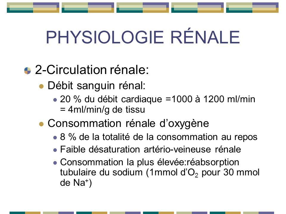 PHYSIOLOGIE RÉNALE 2-Circulation rénale: Débit sanguin rénal: 20 % du débit cardiaque =1000 à 1200 ml/min = 4ml/min/g de tissu Consommation rénale doxygène 8 % de la totalité de la consommation au repos Faible désaturation artério-veineuse rénale Consommation la plus élevée:réabsorption tubulaire du sodium (1mmol dO 2 pour 30 mmol de Na + )