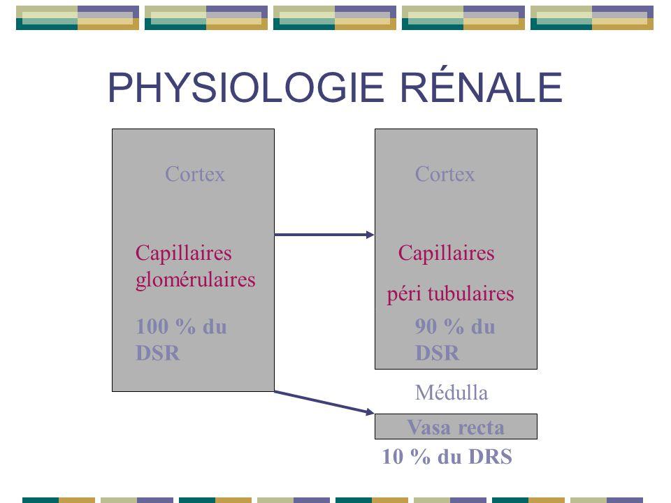 PHYSIOLOGIE RÉNALE Vasa recta Cortex Capillaires glomérulaires Capillaires péri tubulaires 100 % du DSR 90 % du DSR Médulla 10 % du DRS