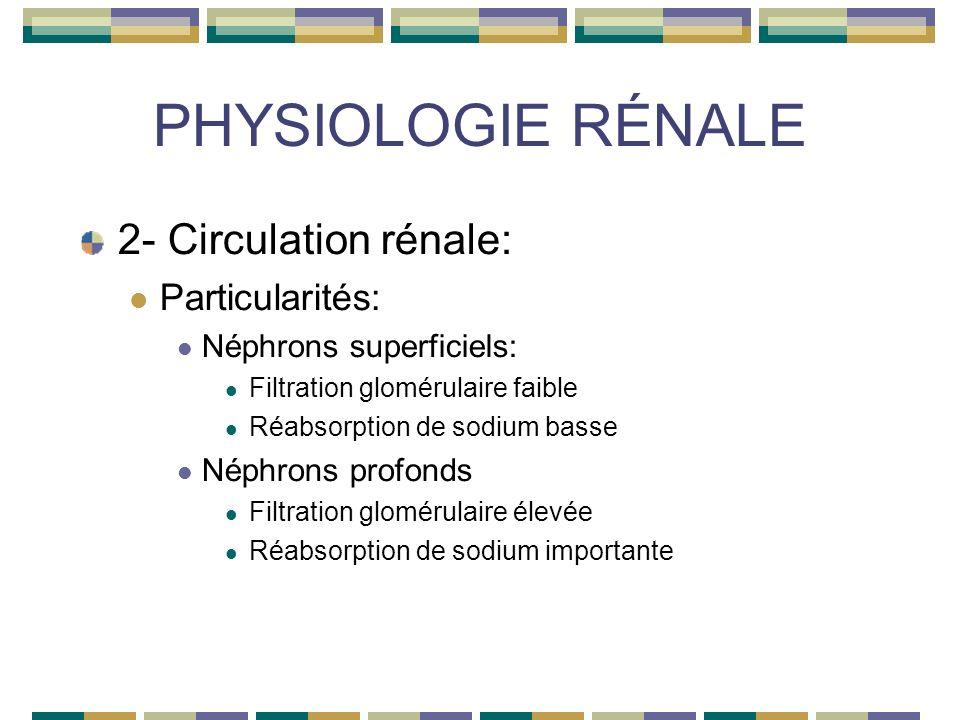 PHYSIOLOGIE RÉNALE 2- Circulation rénale: Particularités: Néphrons superficiels: Filtration glomérulaire faible Réabsorption de sodium basse Néphrons profonds Filtration glomérulaire élevée Réabsorption de sodium importante