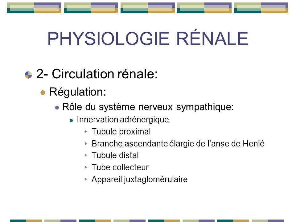 PHYSIOLOGIE RÉNALE 2- Circulation rénale: Régulation: Rôle du système nerveux sympathique: Innervation adrénergique Tubule proximal Branche ascendante élargie de lanse de Henlé Tubule distal Tube collecteur Appareil juxtaglomérulaire