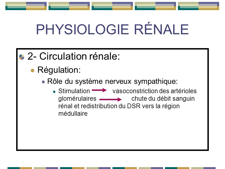 PHYSIOLOGIE RÉNALE 2- Circulation rénale: Régulation: Rôle du système nerveux sympathique: Stimulation vasoconstriction des artérioles glomérulaireschute du débit sanguin rénal et redistribution du DSR vers la région médullaire