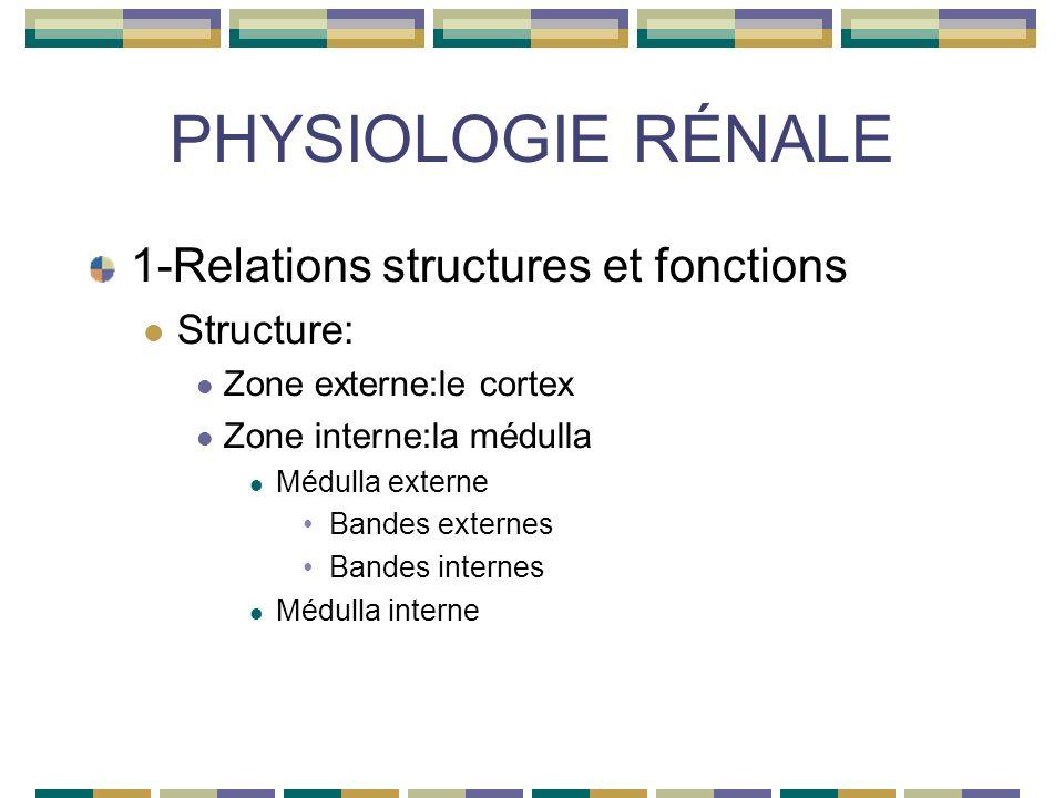 PHYSIOLOGIE RÉNALE 1-Relations structures et fonctions Structure:unités foctionnelles:les NÉPHRONS 1milion environ 2 populations néphroniques: Glomérules qui filtre leau plasmatique Tubules qui assurent la réabsorption et la sécrétion de molécules