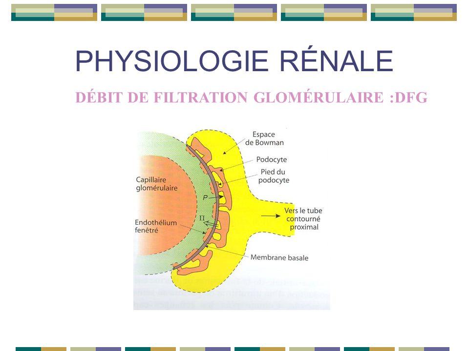 PHYSIOLOGIE RÉNALE DÉBIT DE FILTRATION GLOMÉRULAIRE :DFG