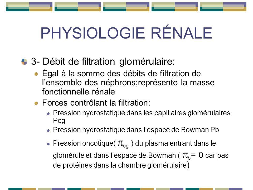 PHYSIOLOGIE RÉNALE 3- Débit de filtration glomérulaire: Égal à la somme des débits de filtration de lensemble des néphrons;représente la masse fonctionnelle rénale Forces contrôlant la filtration: Pression hydrostatique dans les capillaires glomérulaires Pcg Pression hydrostatique dans lespace de Bowman Pb Pression oncotique( cg ) du plasma entrant dans le glomérule et dans lespace de Bowman ( b = 0 car pas de protéines dans la chambre glomérulaire )