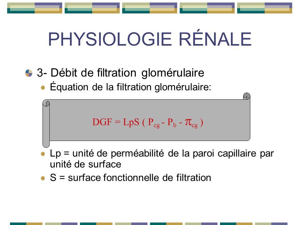PHYSIOLOGIE RÉNALE 3- Débit de filtration glomérulaire Équation de la filtration glomérulaire: Lp = unité de perméabilité de la paroi capillaire par unité de surface S = surface fonctionnelle de filtration DGF = LpS ( P cg - P b - cg )