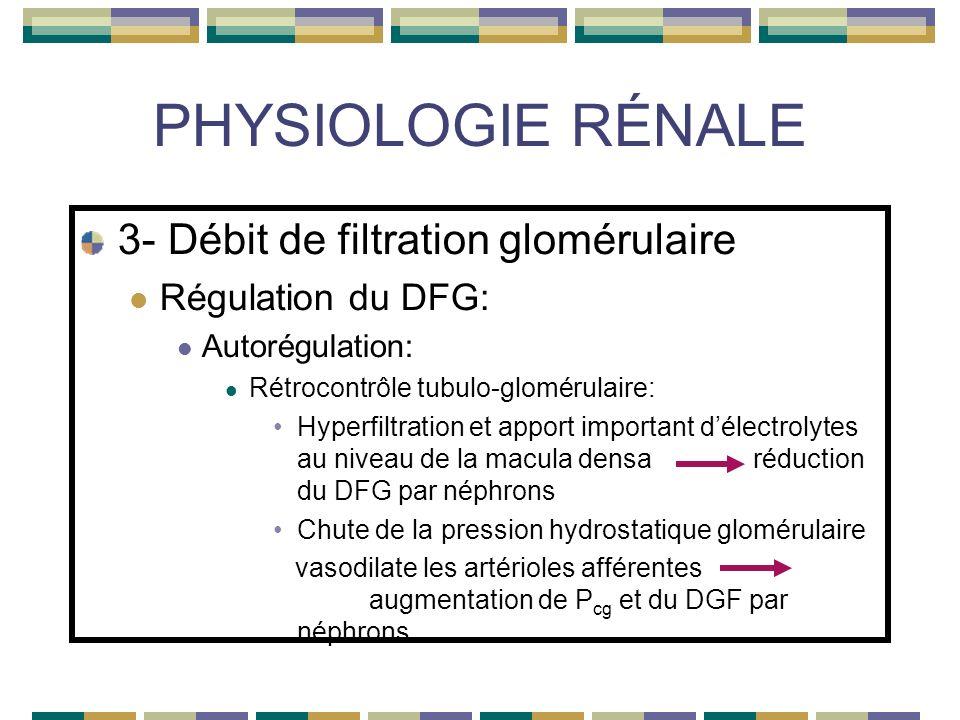 PHYSIOLOGIE RÉNALE 3- Débit de filtration glomérulaire Régulation du DFG: Autorégulation: Rétrocontrôle tubulo-glomérulaire: Hyperfiltration et apport important délectrolytes au niveau de la macula densa réduction du DFG par néphrons Chute de la pression hydrostatique glomérulaire vasodilate les artérioles afférentes augmentation de P cg et du DGF par néphrons