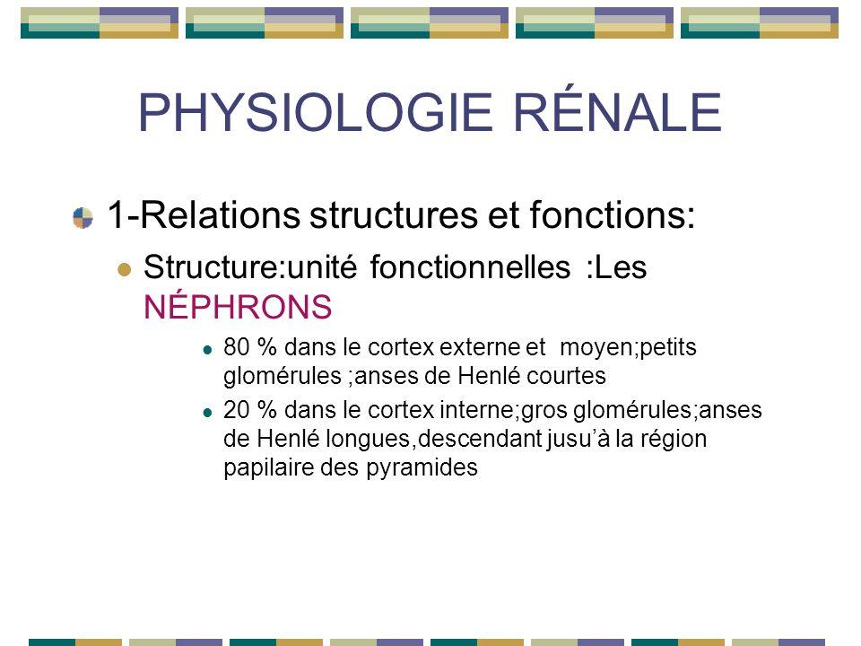 PHYSIOLOGIE RÉNALE 1-Relations structures et fonctions: Structure:unité fonctionnelles :Les NÉPHRONS 80 % dans le cortex externe et moyen;petits glomérules ;anses de Henlé courtes 20 % dans le cortex interne;gros glomérules;anses de Henlé longues,descendant jusuà la région papilaire des pyramides