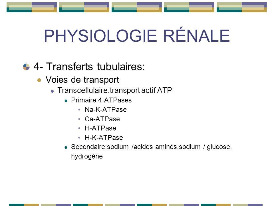 PHYSIOLOGIE RÉNALE 4- Transferts tubulaires: Voies de transport Transcellulaire:transport actif ATP Primaire:4 ATPases Na-K-ATPase Ca-ATPase H-ATPase H-K-ATPase Secondaire:sodium /acides aminés,sodium / glucose, hydrogène
