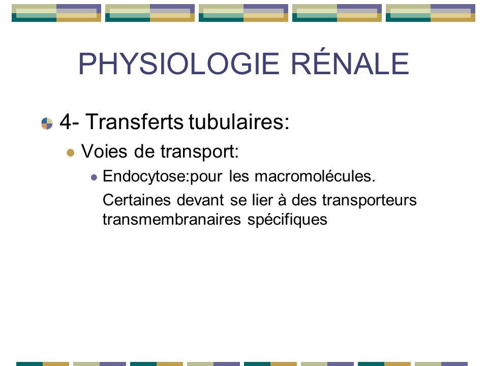 PHYSIOLOGIE RÉNALE 4- Transferts tubulaires: Voies de transport: Endocytose:pour les macromolécules.