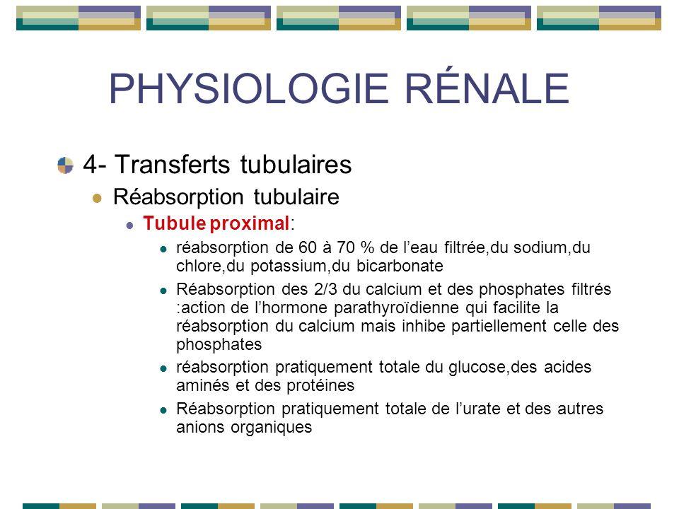 PHYSIOLOGIE RÉNALE 4- Transferts tubulaires Réabsorption tubulaire Tubule proximal: réabsorption de 60 à 70 % de leau filtrée,du sodium,du chlore,du potassium,du bicarbonate Réabsorption des 2/3 du calcium et des phosphates filtrés :action de lhormone parathyroïdienne qui facilite la réabsorption du calcium mais inhibe partiellement celle des phosphates réabsorption pratiquement totale du glucose,des acides aminés et des protéines Réabsorption pratiquement totale de lurate et des autres anions organiques